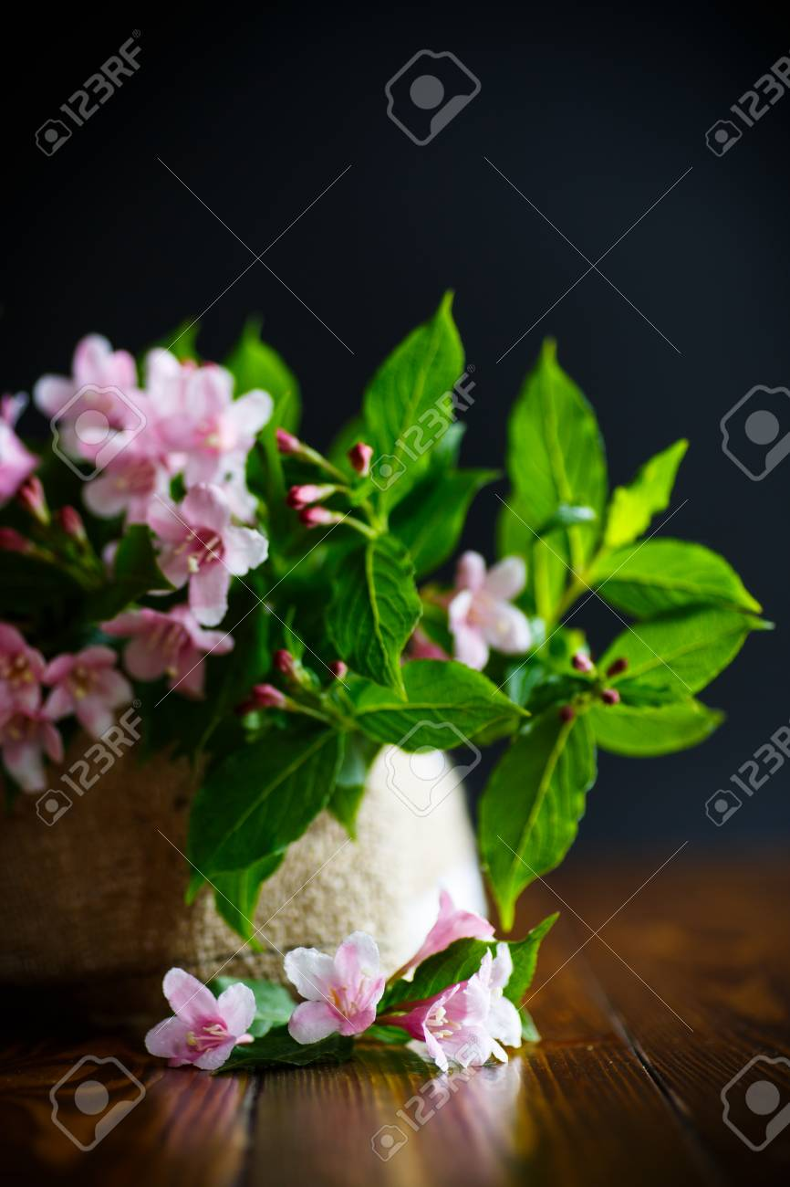 Beautiful Pink Flowers Weigela Stock Photo Picture And Royalty Free
