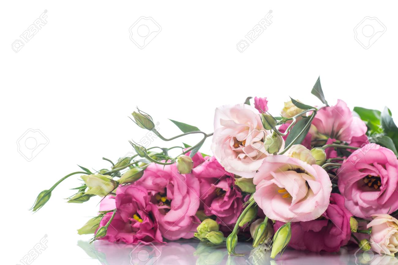Beautiful bouquet of pink lisianthus flowers stock photo picture beautiful bouquet of pink lisianthus flowers stock photo 84576206 mightylinksfo