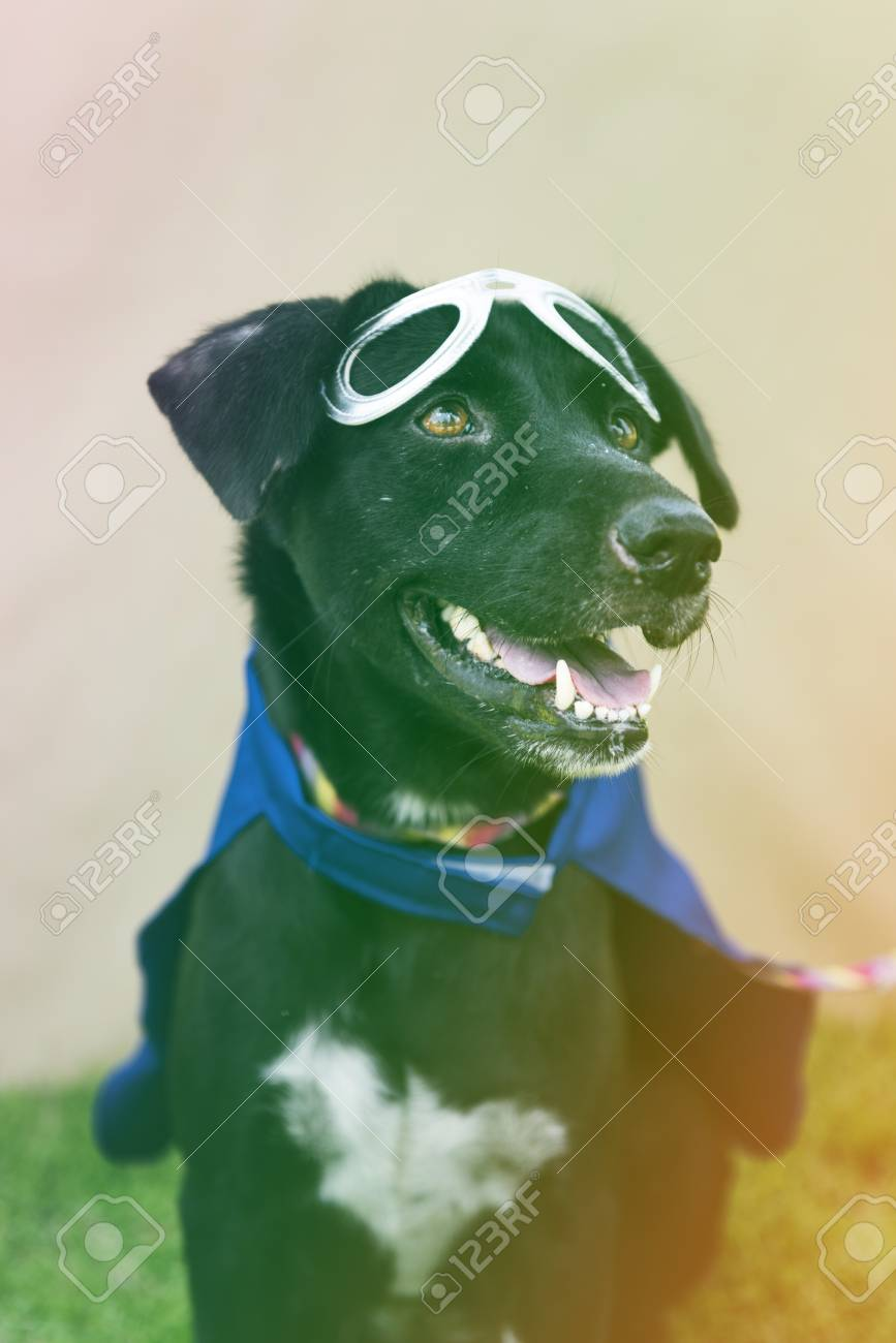 Black Dog Wear Superhero Costume With Mask Stock Photo Picture And
