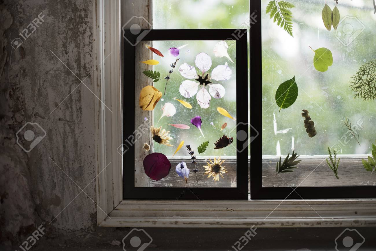 Foliage And Pressed Flower In A Transparent Frame Stock Photo ...