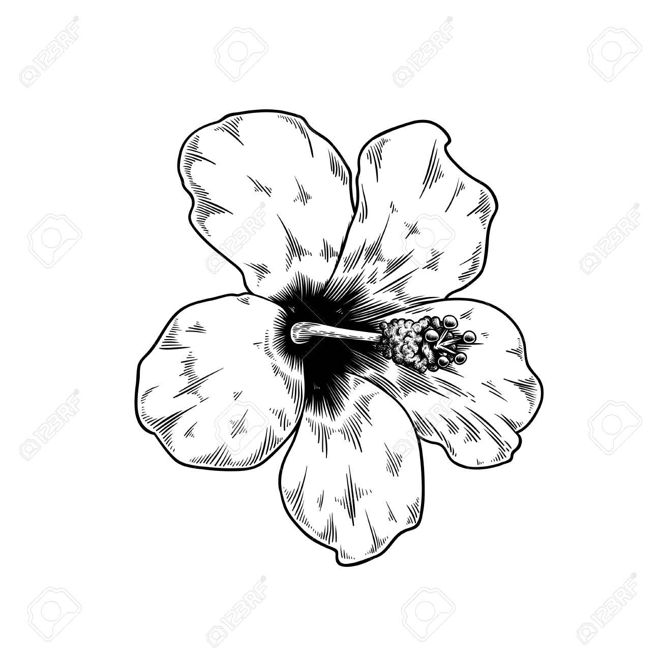 Rose Chinoise Dessin Fleur Nature Vecteur Icône Sur Fond Blanc Clip