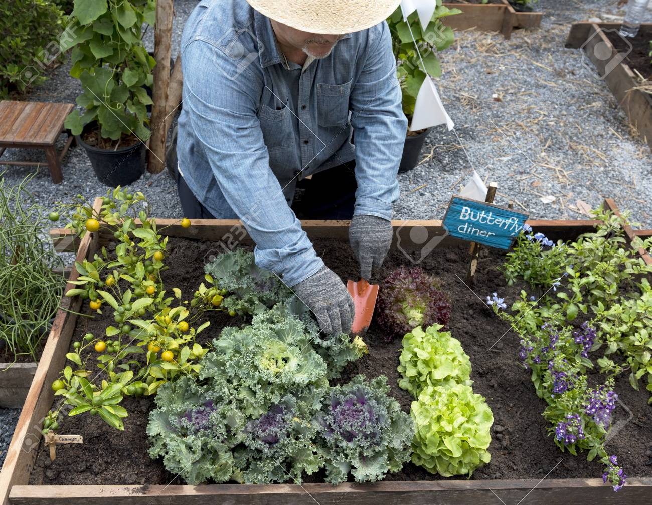 Planting A Backyard Garden senior adult planting vegetable from backyard garden stock photo