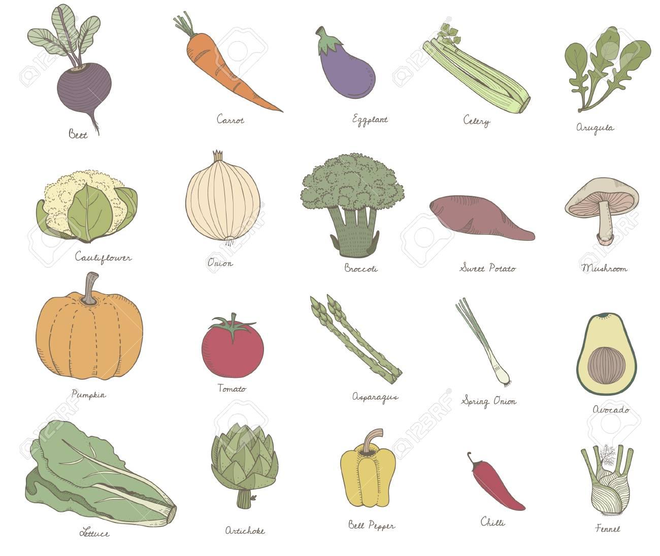 Ilustración De Diferentes Tipos De Vegetales Fotos Retratos Imágenes Y Fotografía De Archivo Libres De Derecho Image 95975044