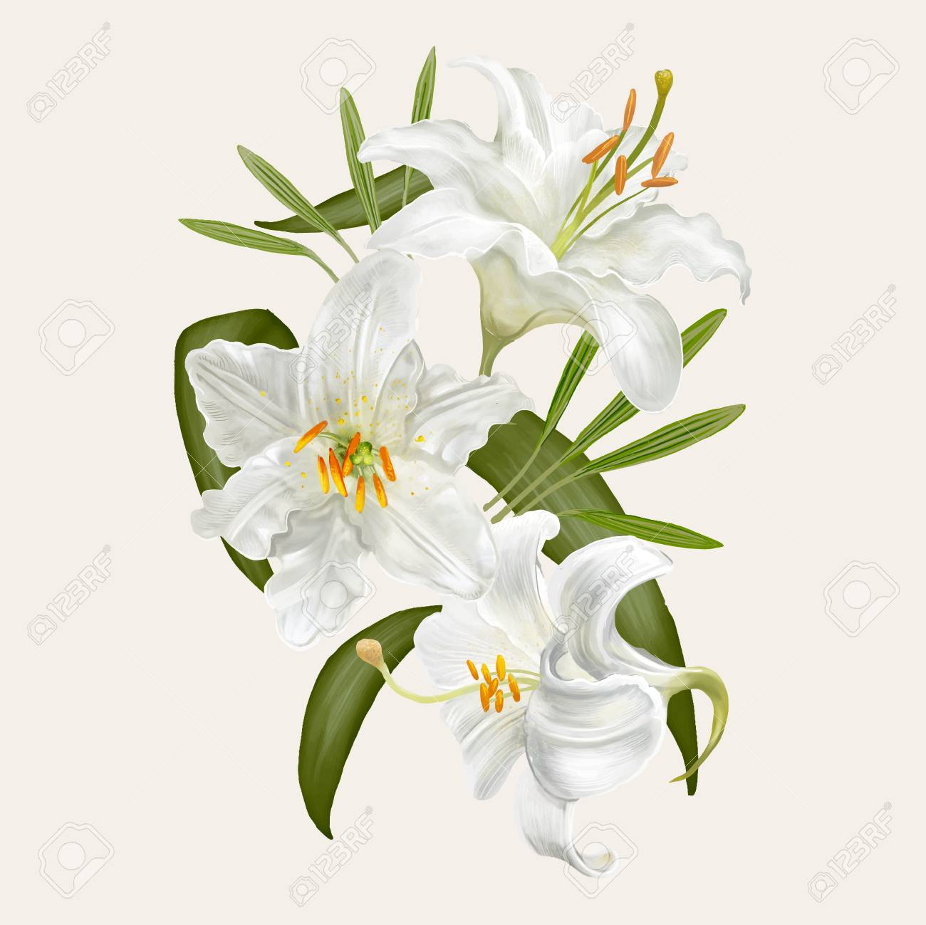 Illustration Drawing Of Lily Flowers Stock Photo Picture And