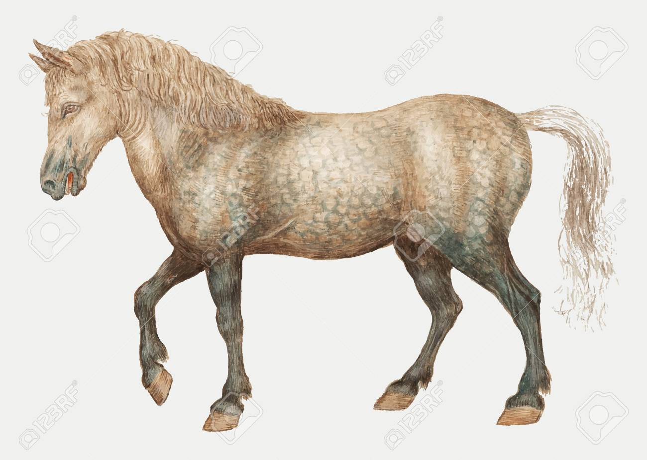 Vintage Horse Illustration In Vector Royalty Free Cliparts Vectors And Stock Illustration Image 115859259