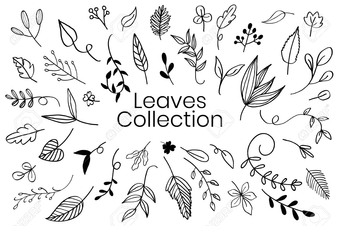 Various leaves doodle collection vector - 124774304