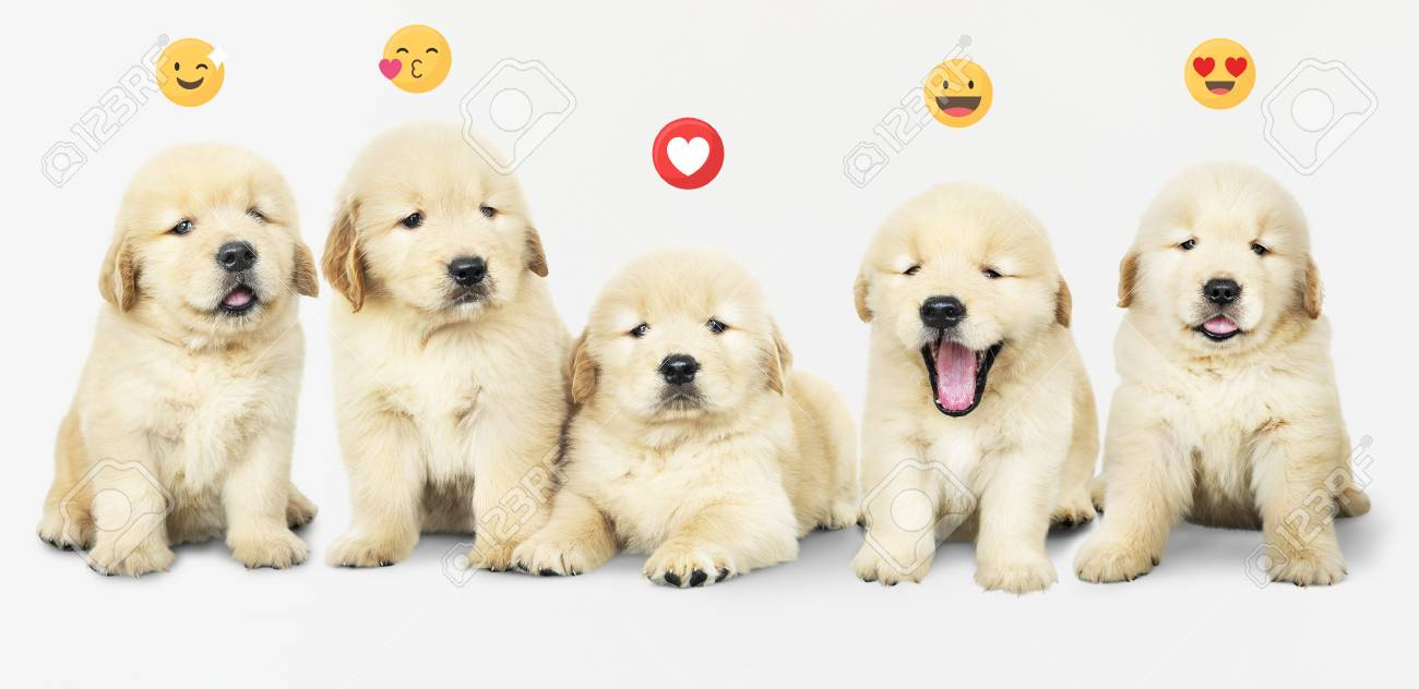 Five adorable golden retriever puppies - 119944319