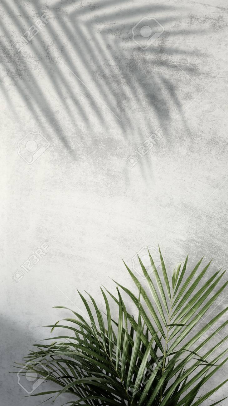 Areca palm shadows on a gray wall - 123234549