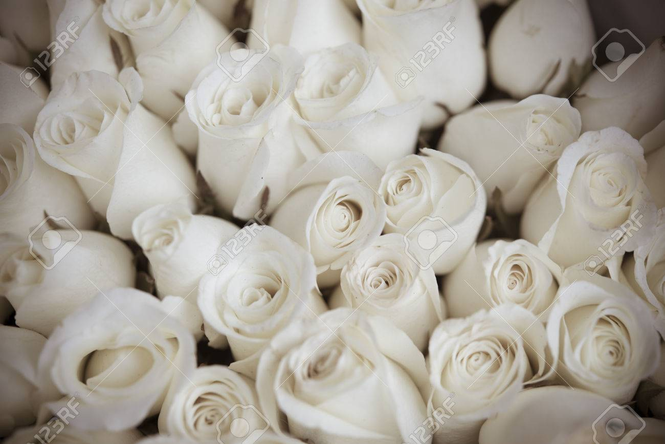 Many Flowers White Roses Stock Photo Picture And Royalty Free Image