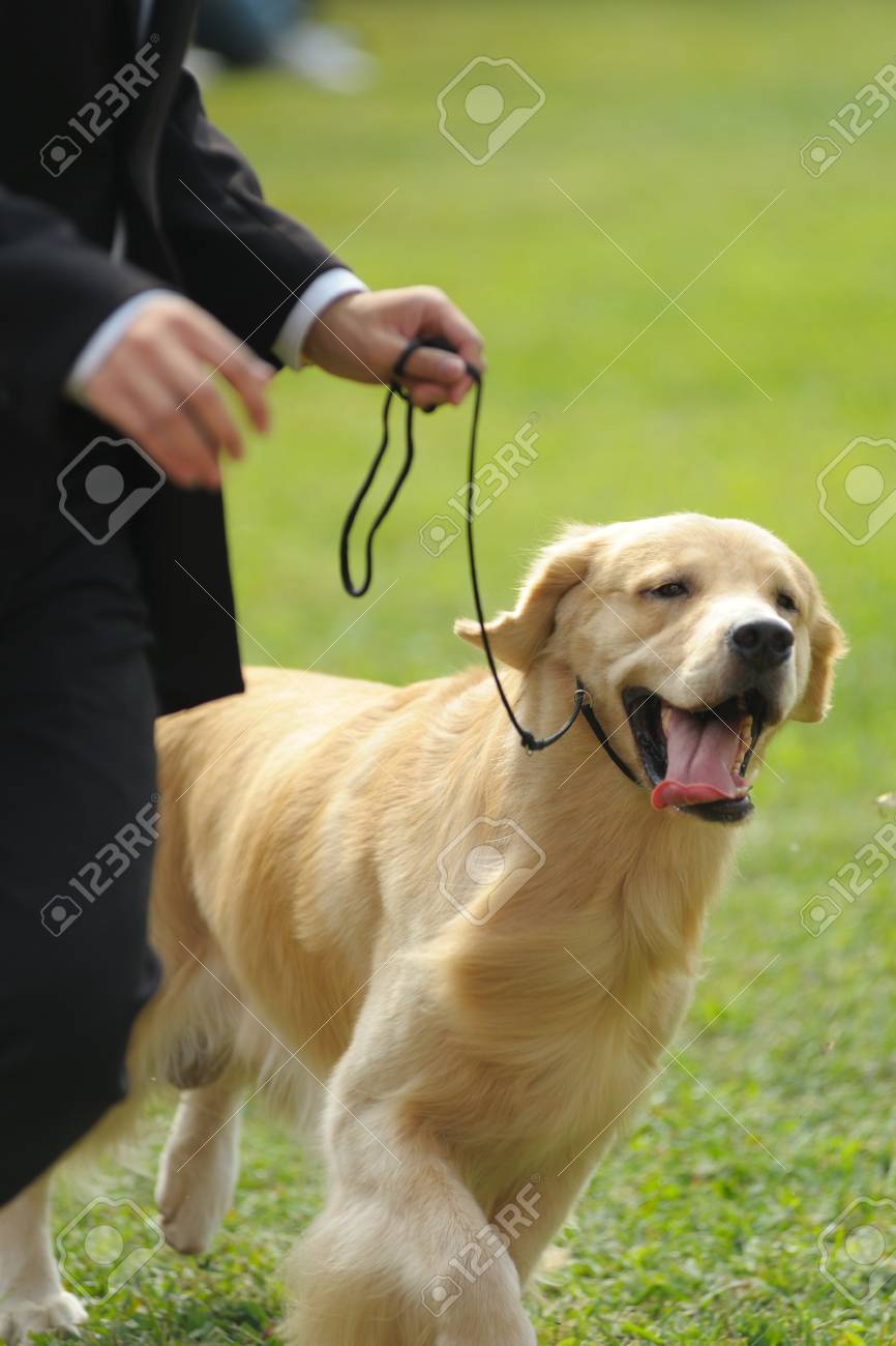 Master playing with his golden retriever dog on the lawn Stock Photo - 8595277