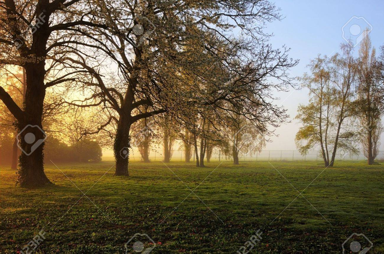 Sunrise in a yard with trees in spring. Stock Photo - 9425815