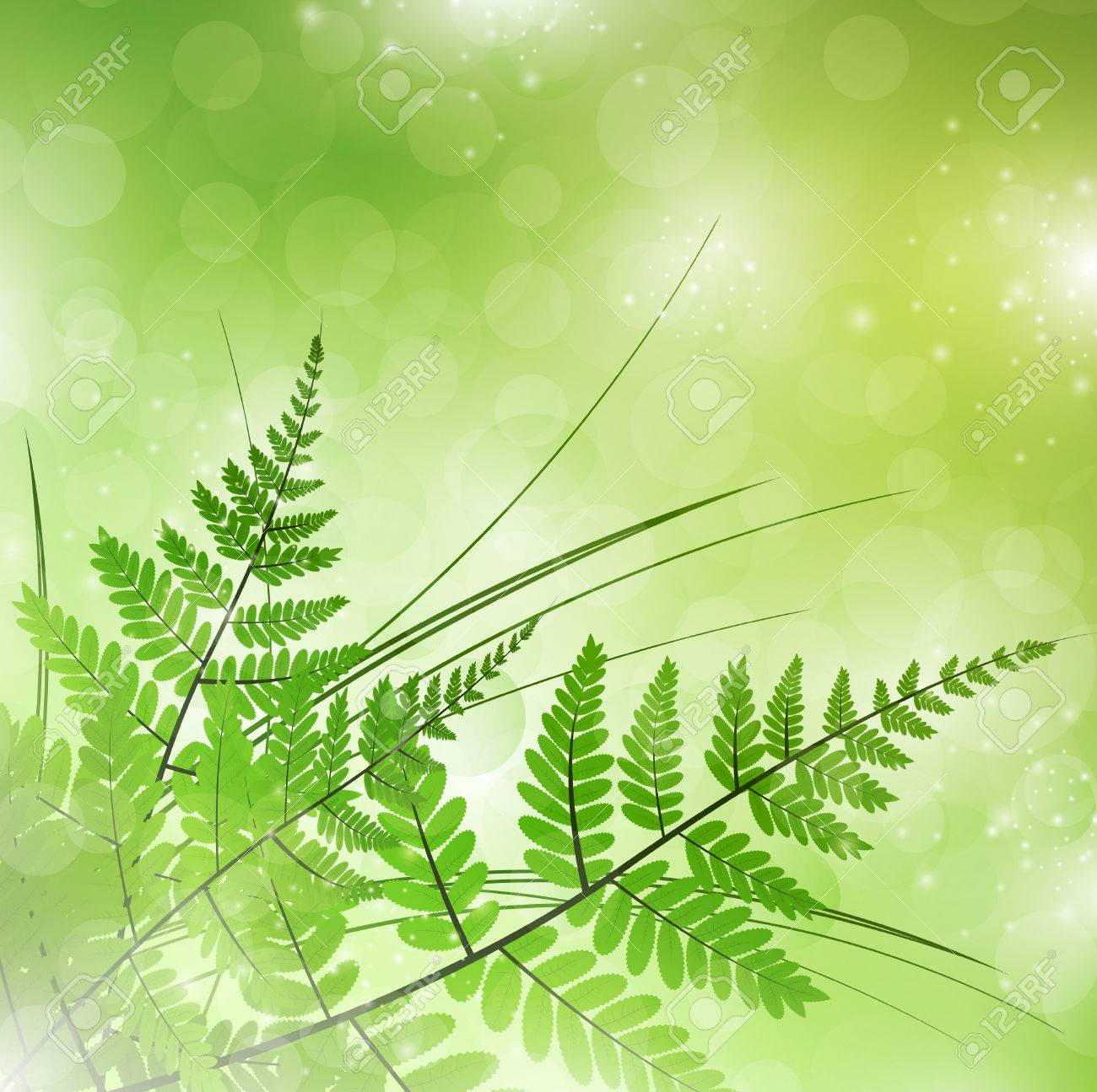 green fern with grass over magic light background - 9093435
