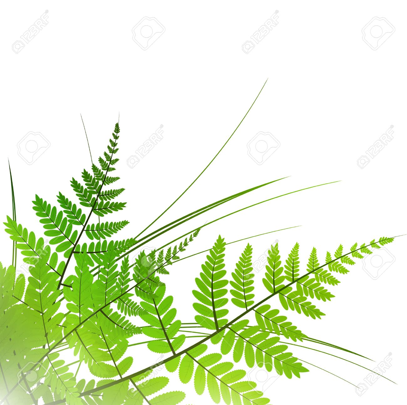 fern with grass over white background, copyspace - 9173429