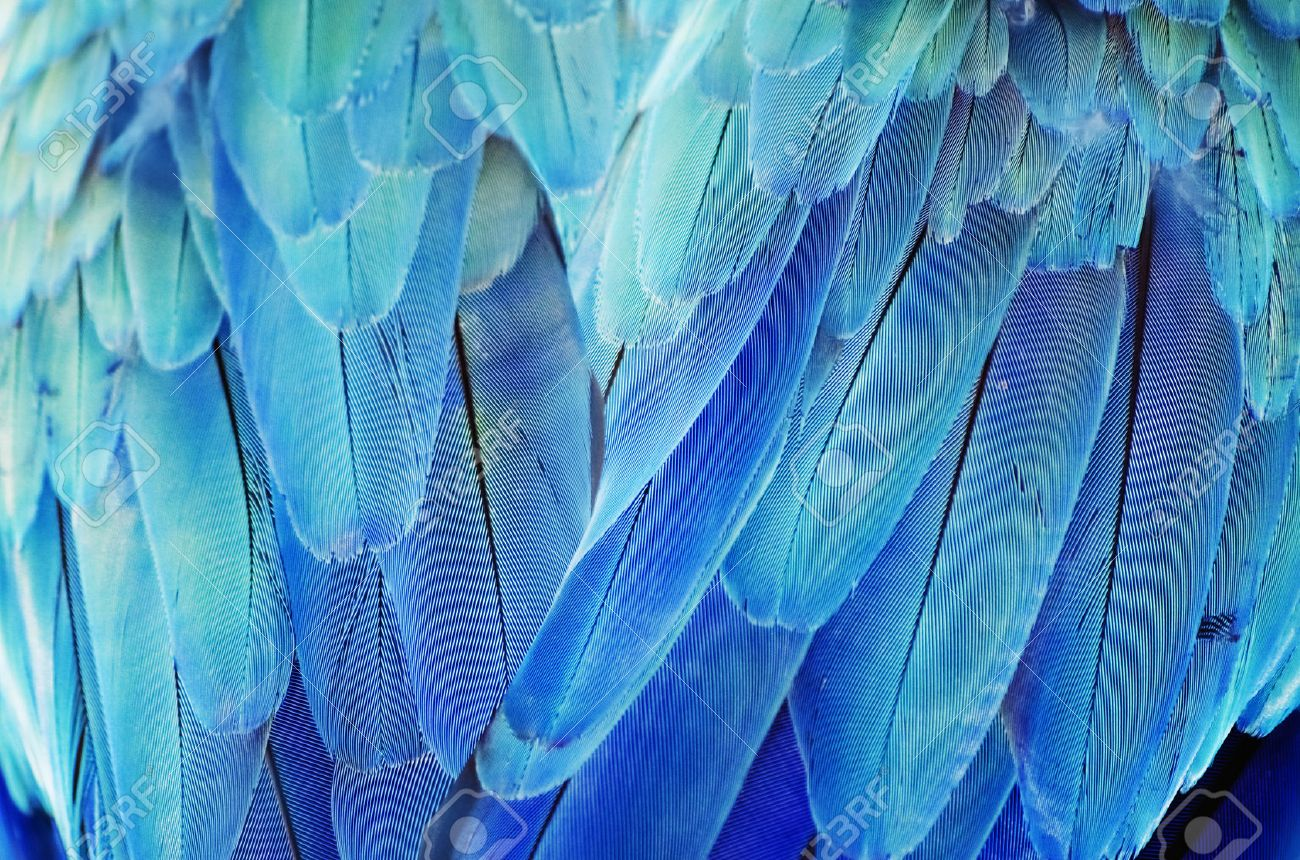 Photo of the Bird Turquoise Feather Background - 47677034