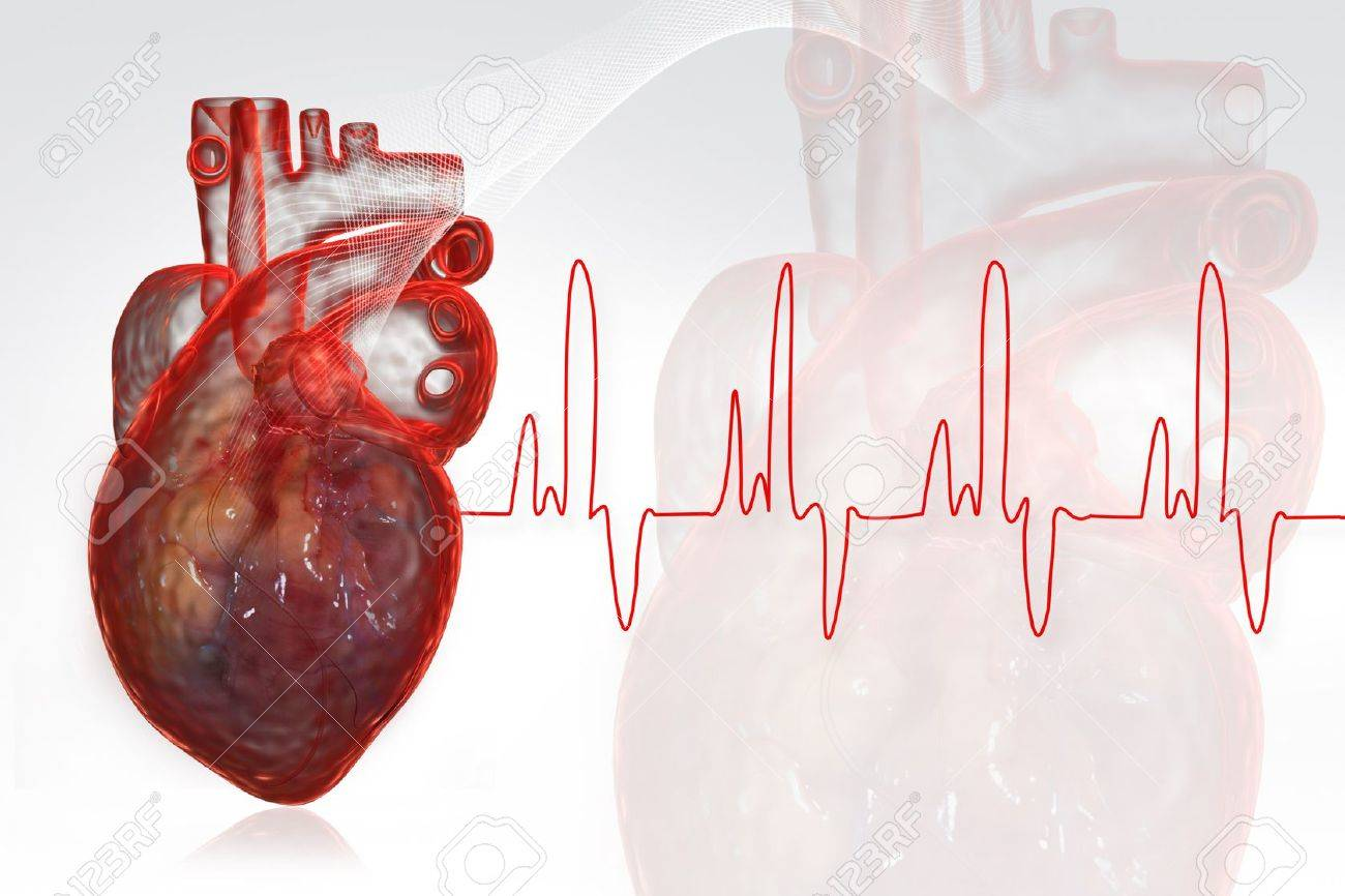 Human heart  with ECG Stock Photo - 8068054