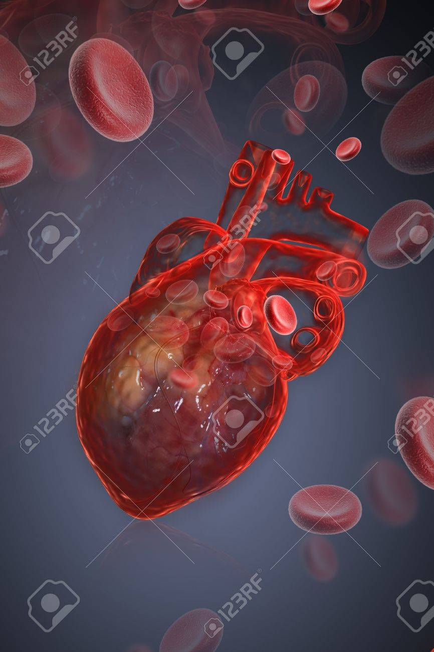 Human heart with blood cell Stock Photo - 8947981