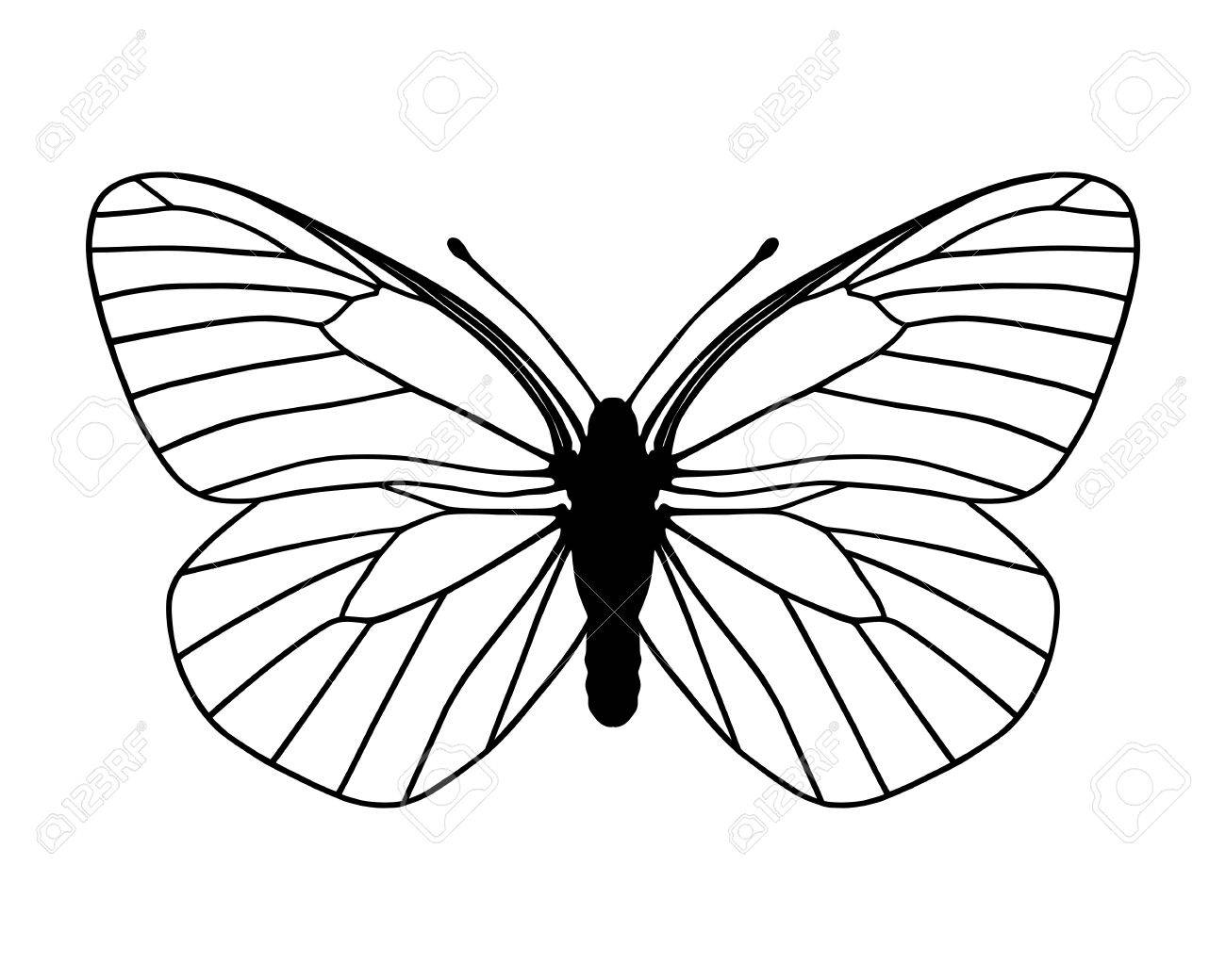 white butterfly royalty free cliparts vectors and stock