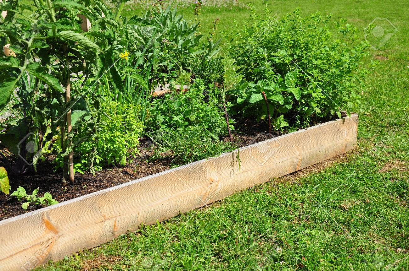 Raised bed with herbs - 35459947