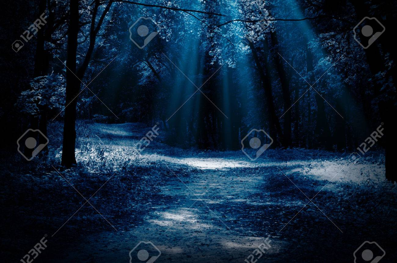 night forest with moonlight beams stock photo picture and royalty