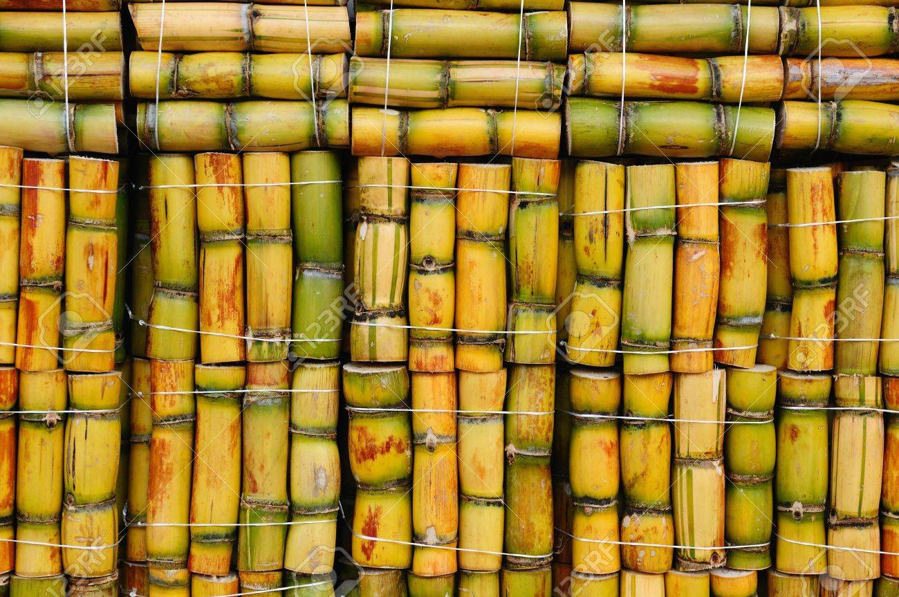 Packs of sugar cane ready to sale, South America Stock Photo - 15237885