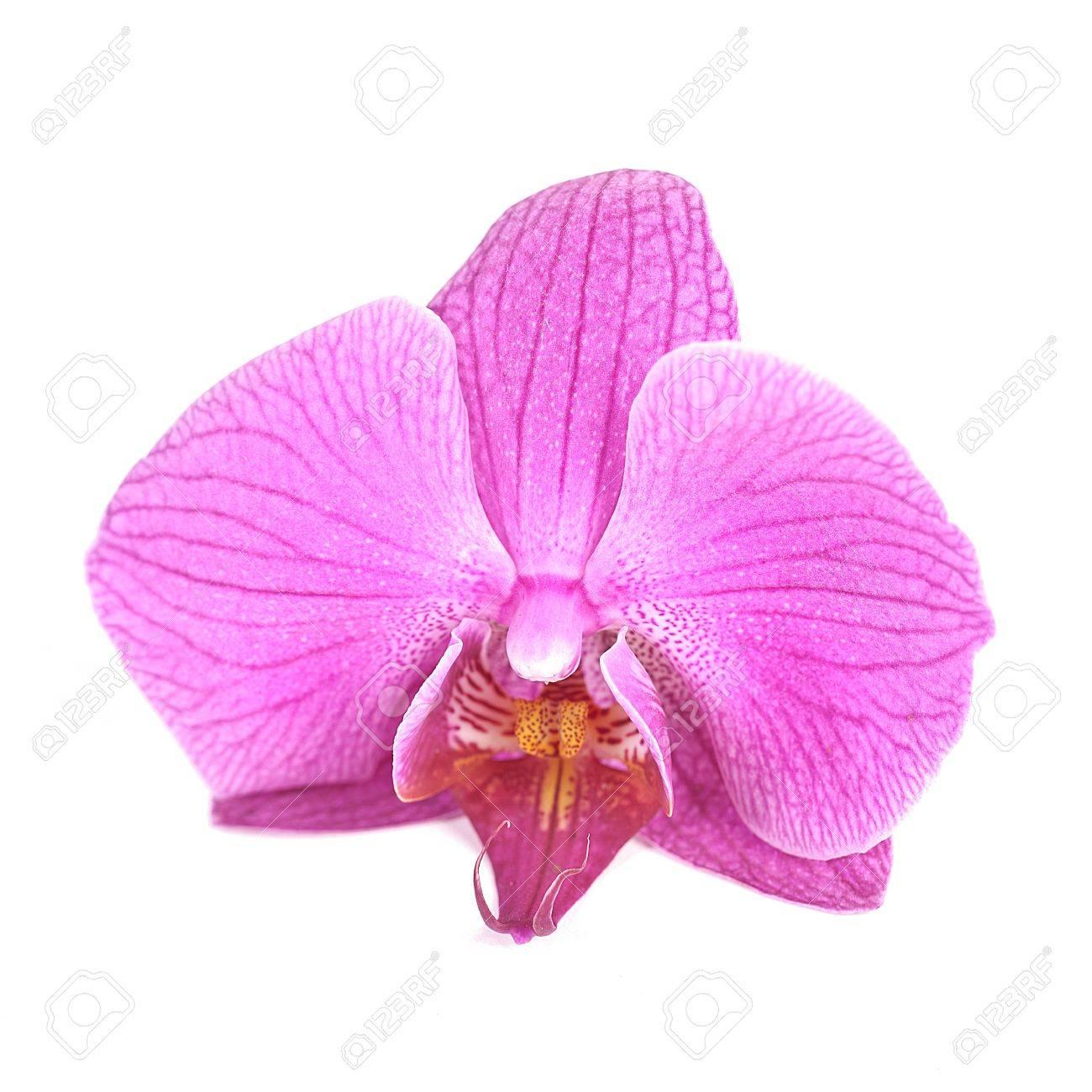 Orchidee Orchidees Rose Petale De Fleur Zen Flore Fleur De