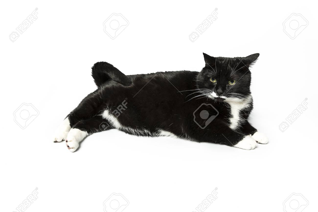 cat isolated black exempted domestic cat pet kitty kitty meow looking whisker faithful Stock Photo - 24971850