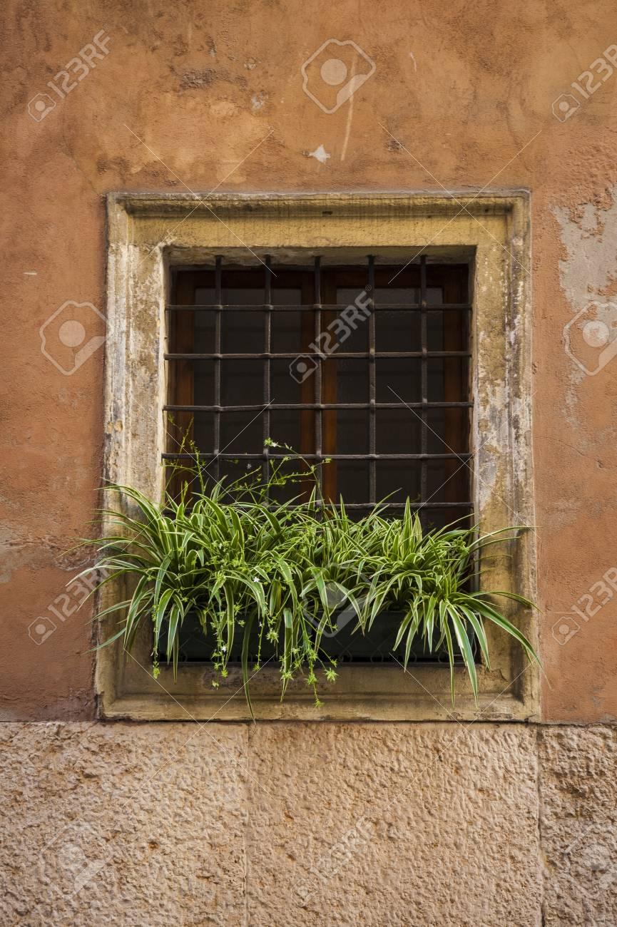 Vergitterten Fenster Mit Blumenkasten Voll Von Grünen Pflanzen ...