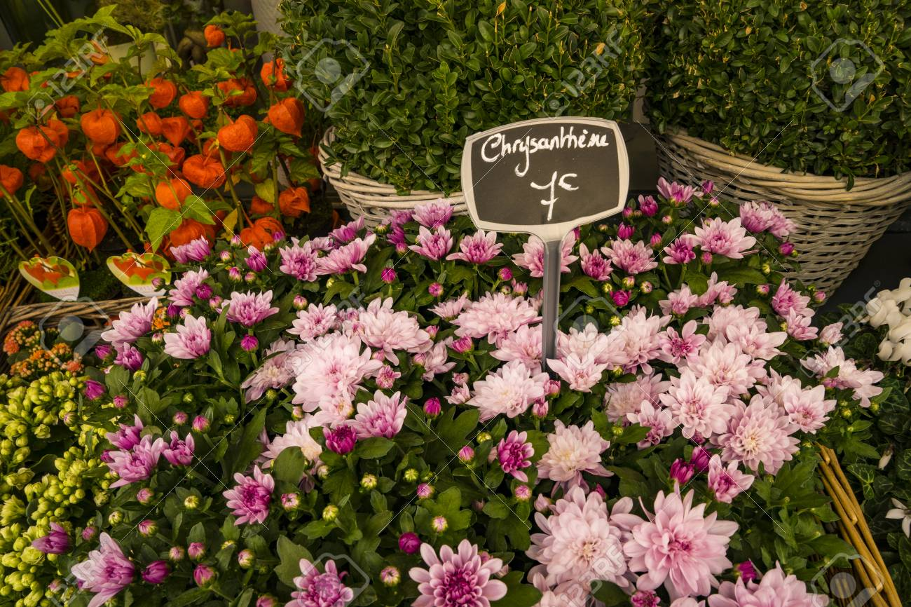 Chrysanthemums For Sale In Paris Flower Shop, With Labels Displaying ...