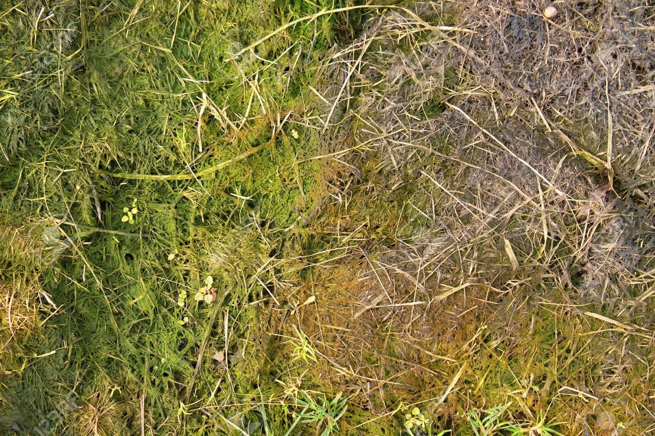 decay geerntete gras in großen grünen geruch hügel in der ecke des