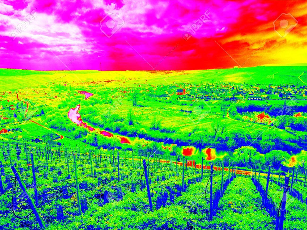 Infrared scan of young vineyards arranged in regular rows covering rolling landscape, agriculture and environment together - 59061714