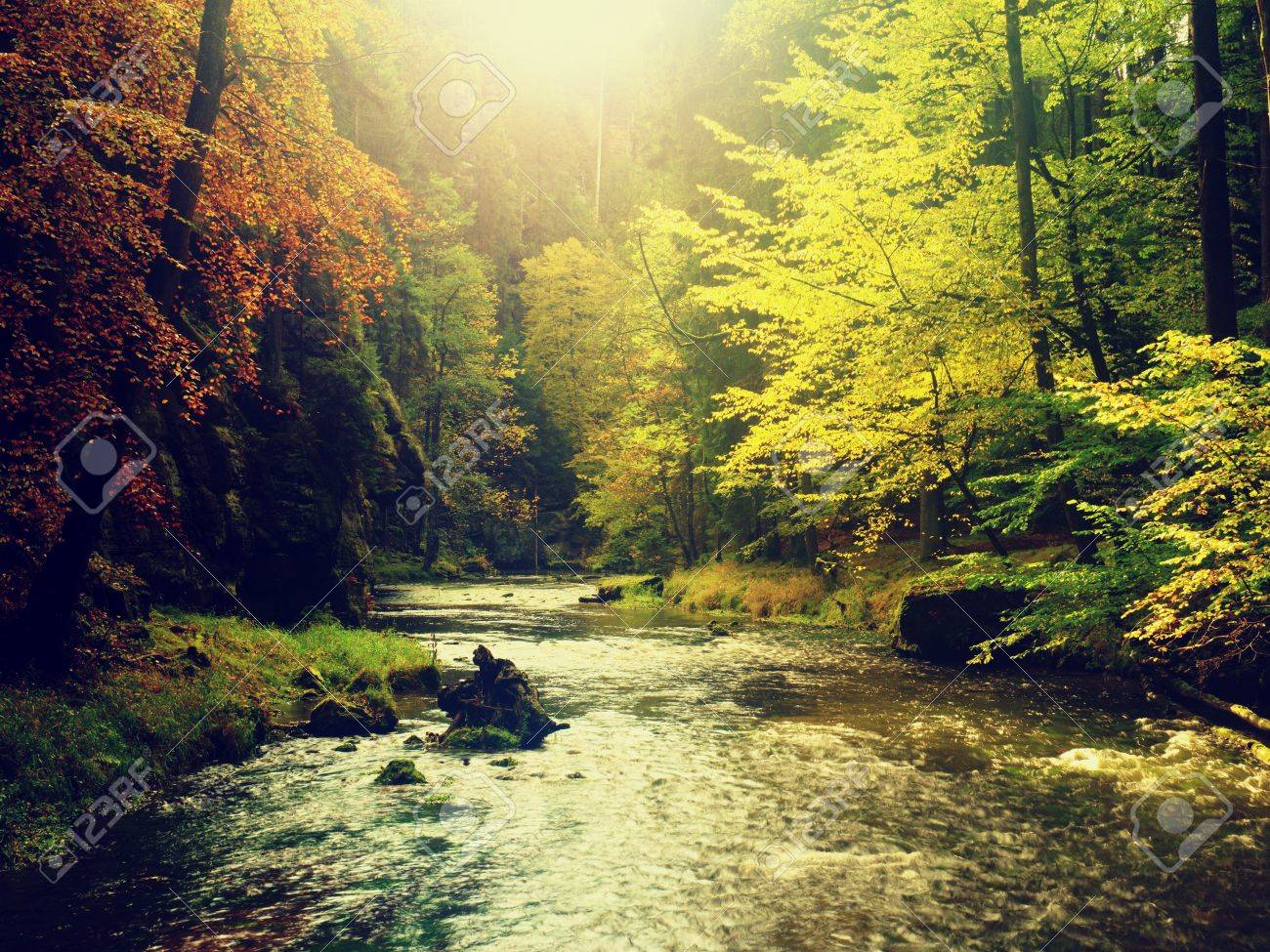 Autumn forest. Water under leaves trees. Low level with yellow orange reflection. - 88589376