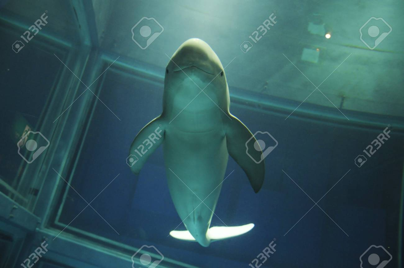 It is the dolphin call Smiling Dolphin in japan ocean park Stock Photo - 11193848