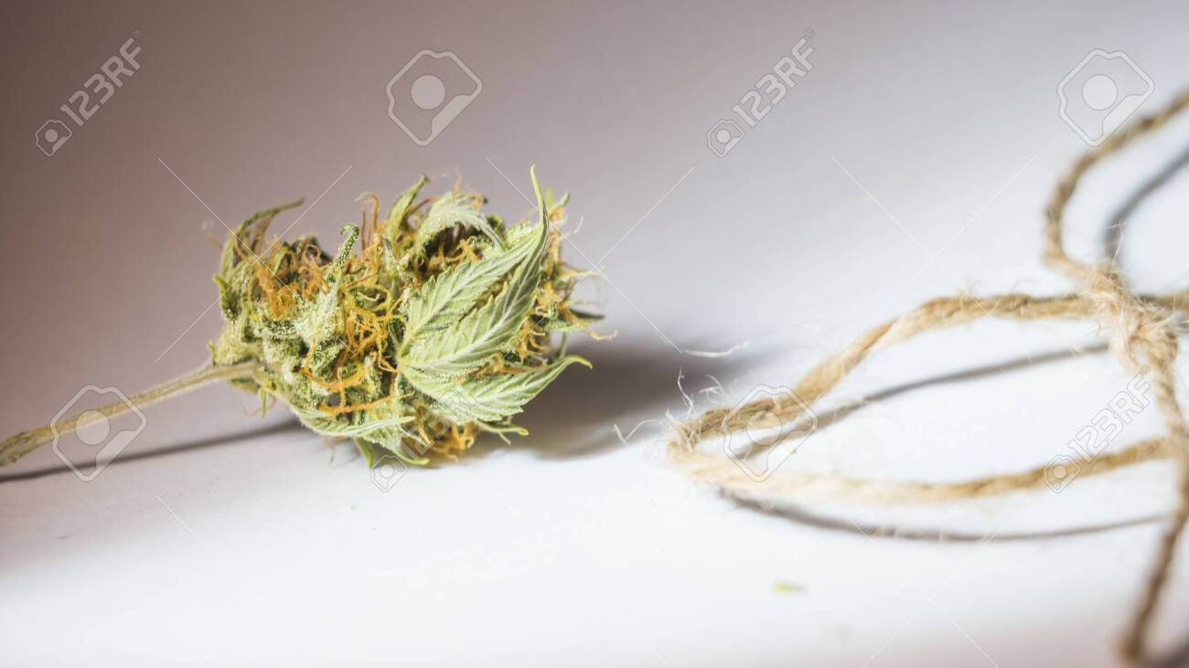 Hemp Thread And Medical Marijuana Buds Close Up Using Cannabis Stock Photo Picture And Royalty Free Image Image 144380843