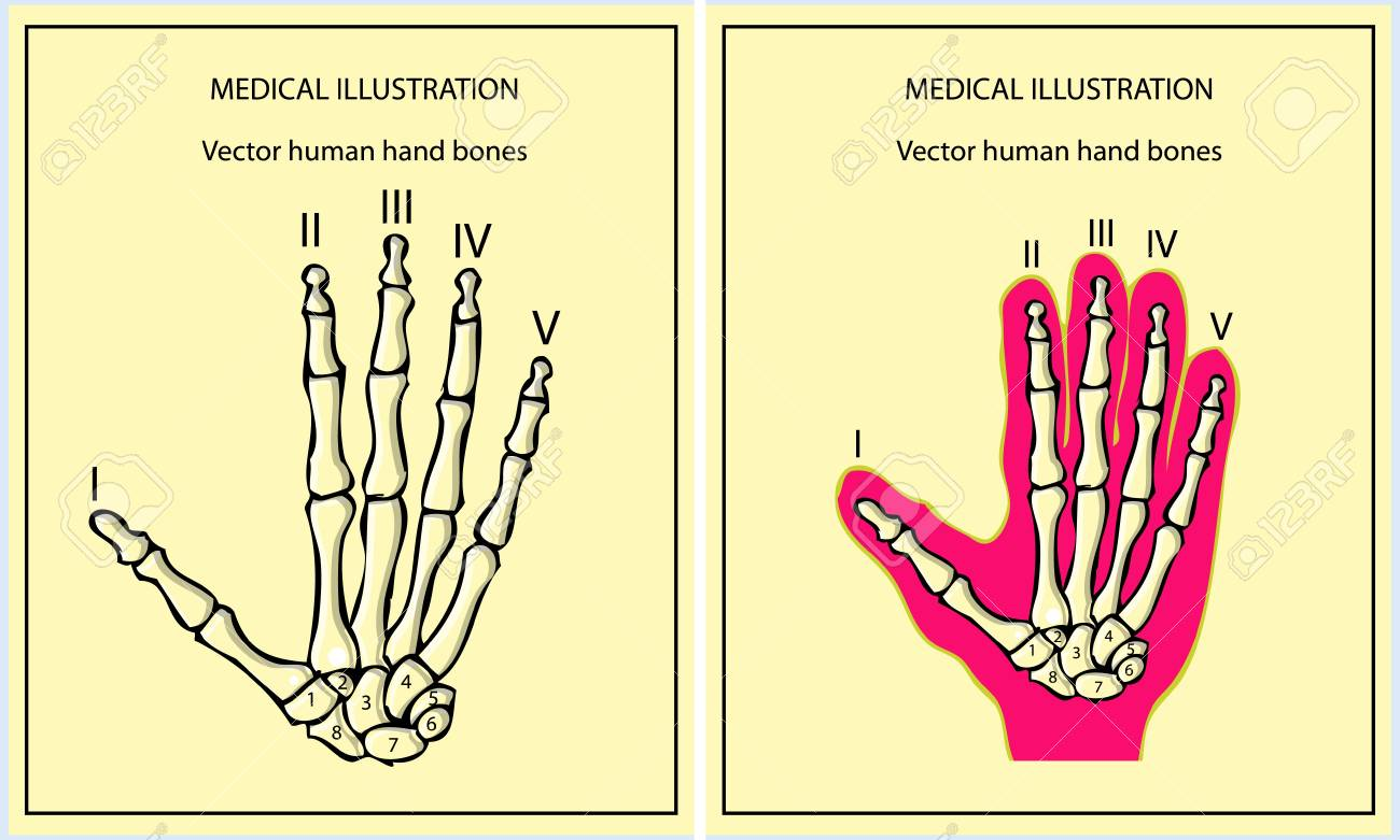 skeletal hand Stock Vector - 9631896