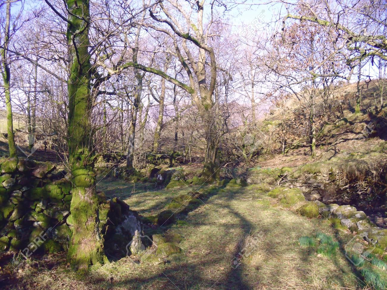 Birker Fell, Lake District, Cumbria Stock Photo - 24053460