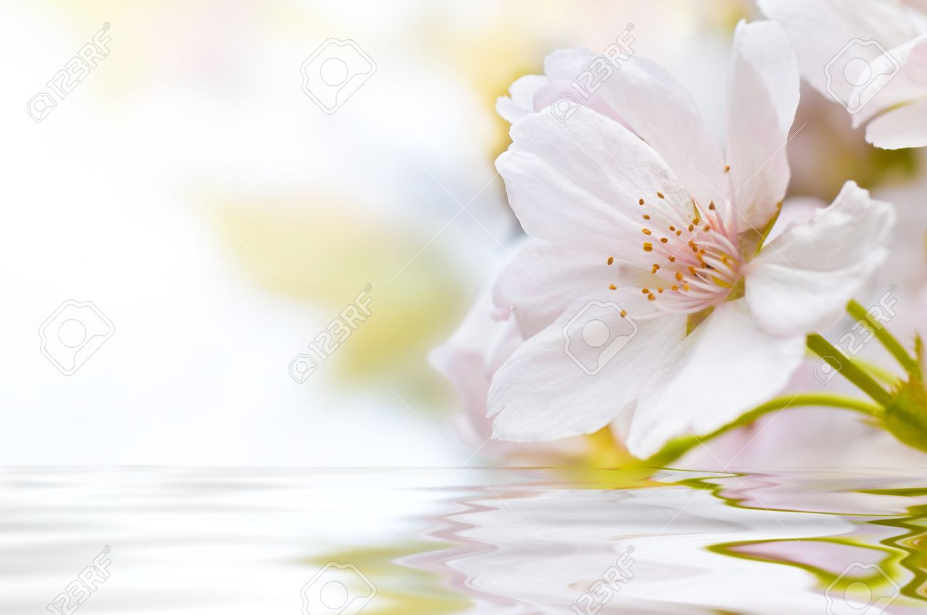 Cherry Blossom with water and waves Stock Photo - 8720735