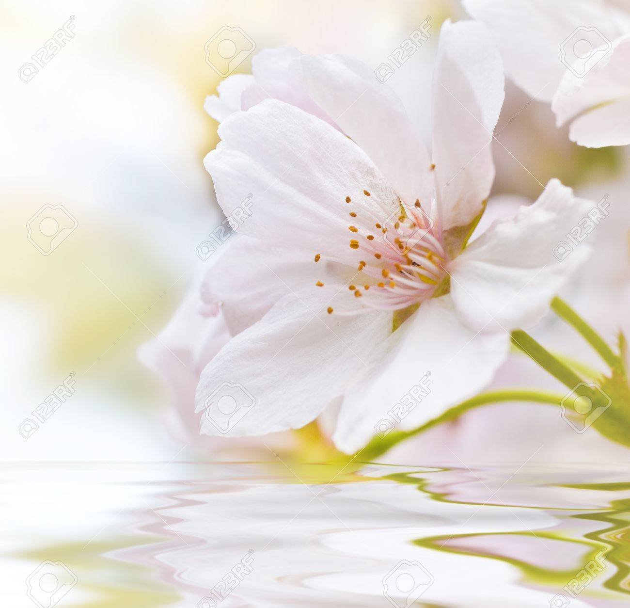 Cherry blossom square with water and waves Stock Photo - 8720737