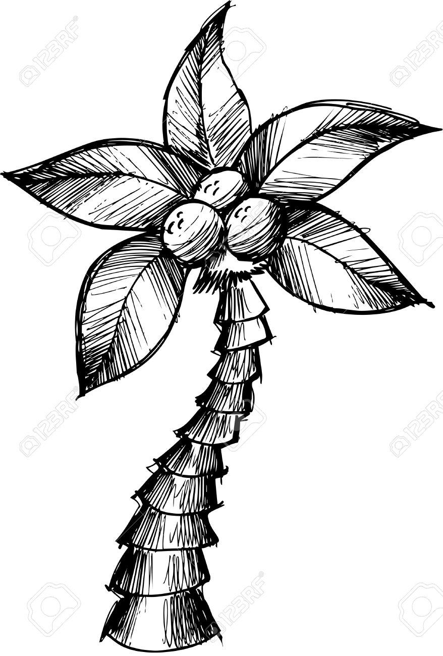 Sketchy Doodle Palm Tree Vector Illustration Stock Vector - 6541797