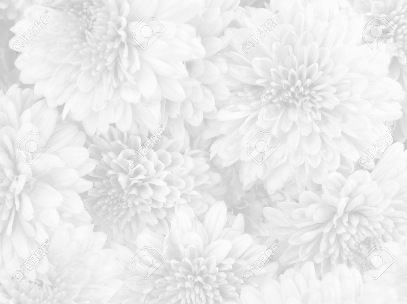 White flowers background stock photo picture and royalty free image white flowers background mightylinksfo Images