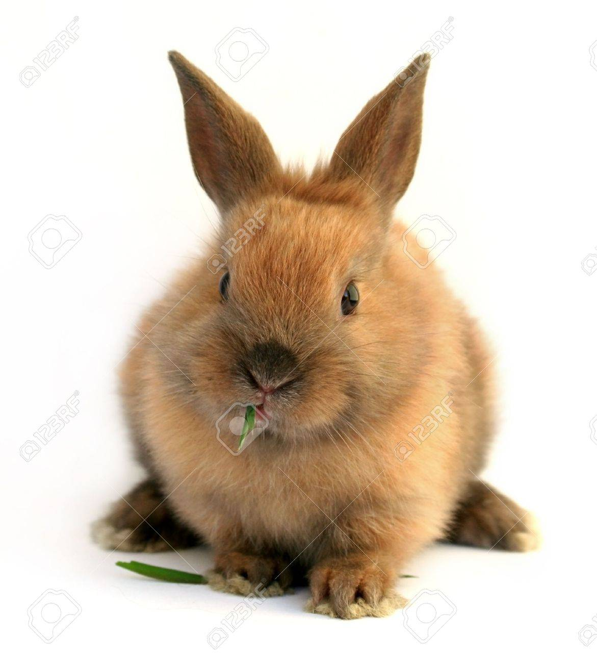 Easter  rabbit eating grass Stock Photo - 2673465