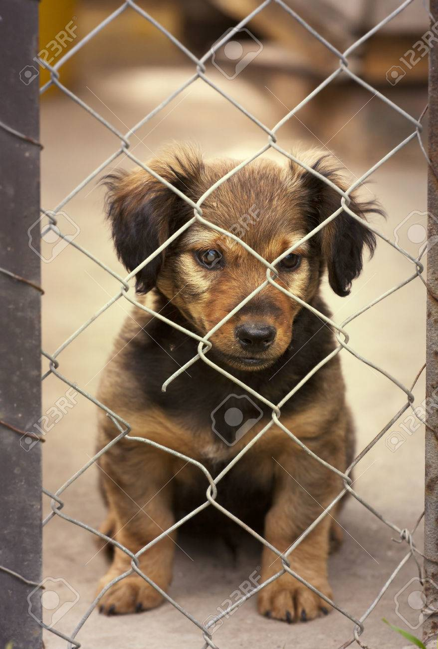 Dachshund Puppy Sitting Behind The Wire Mesh Fence Stock Photo ...