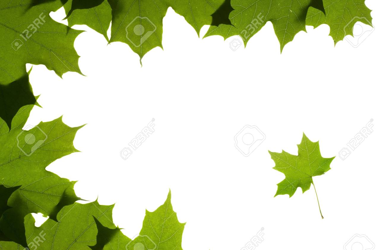 leaf  pattern Stock Photo - 3258351