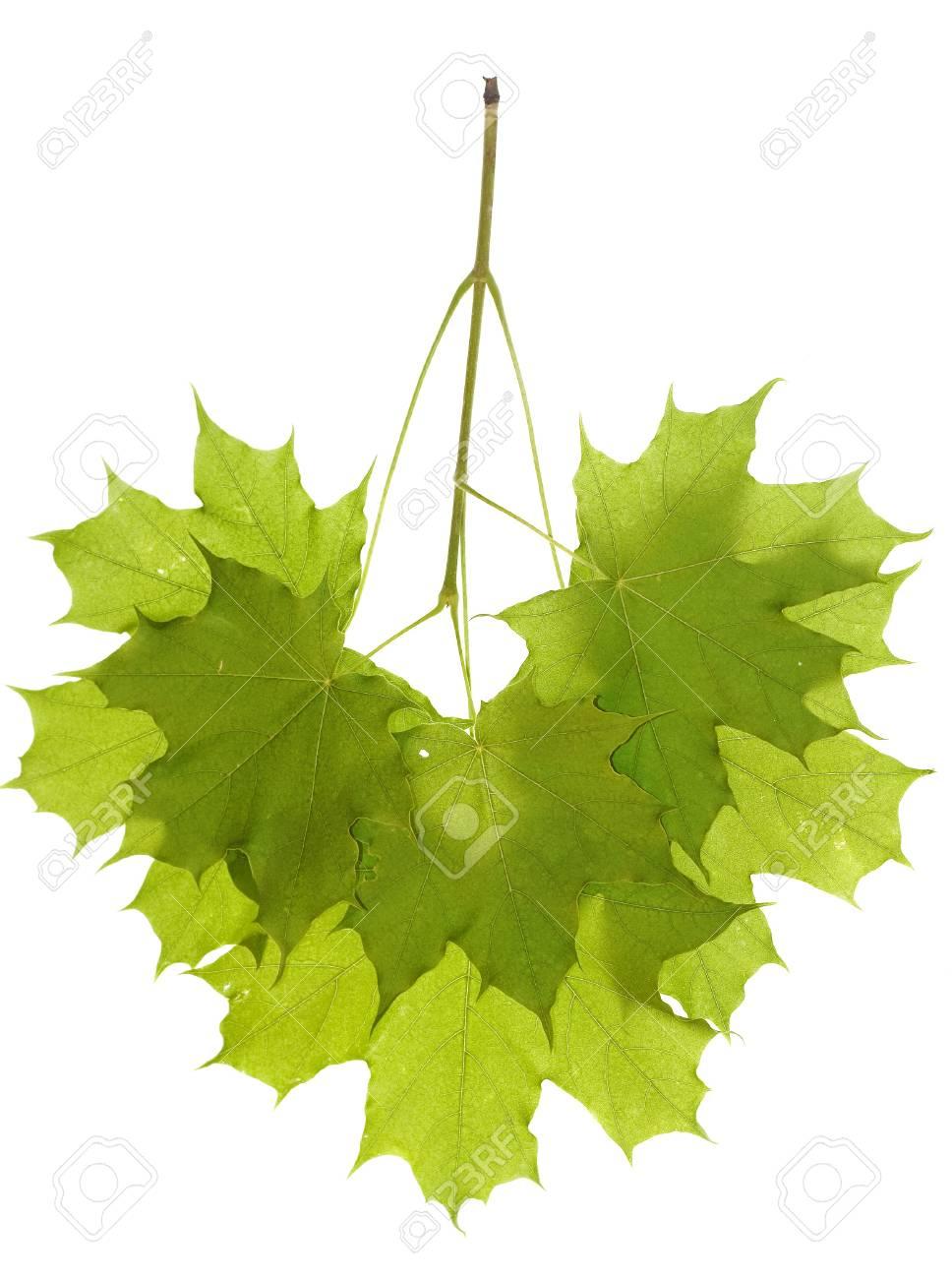 Leaves isolated on white background Stock Photo - 4409880