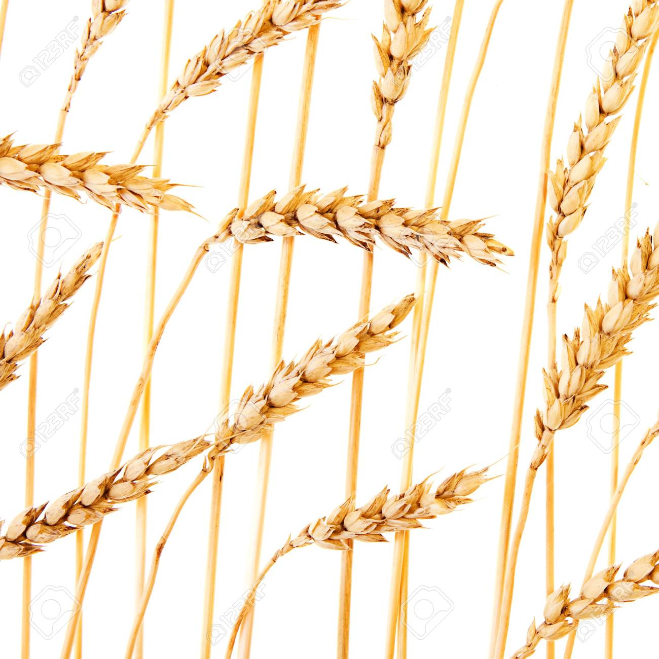Golden wheat isolated on a white background. Stock Photo - 5375198