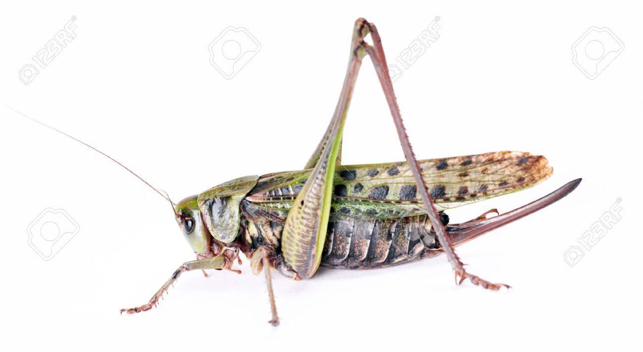 large beetle isolated on white background - 7495822