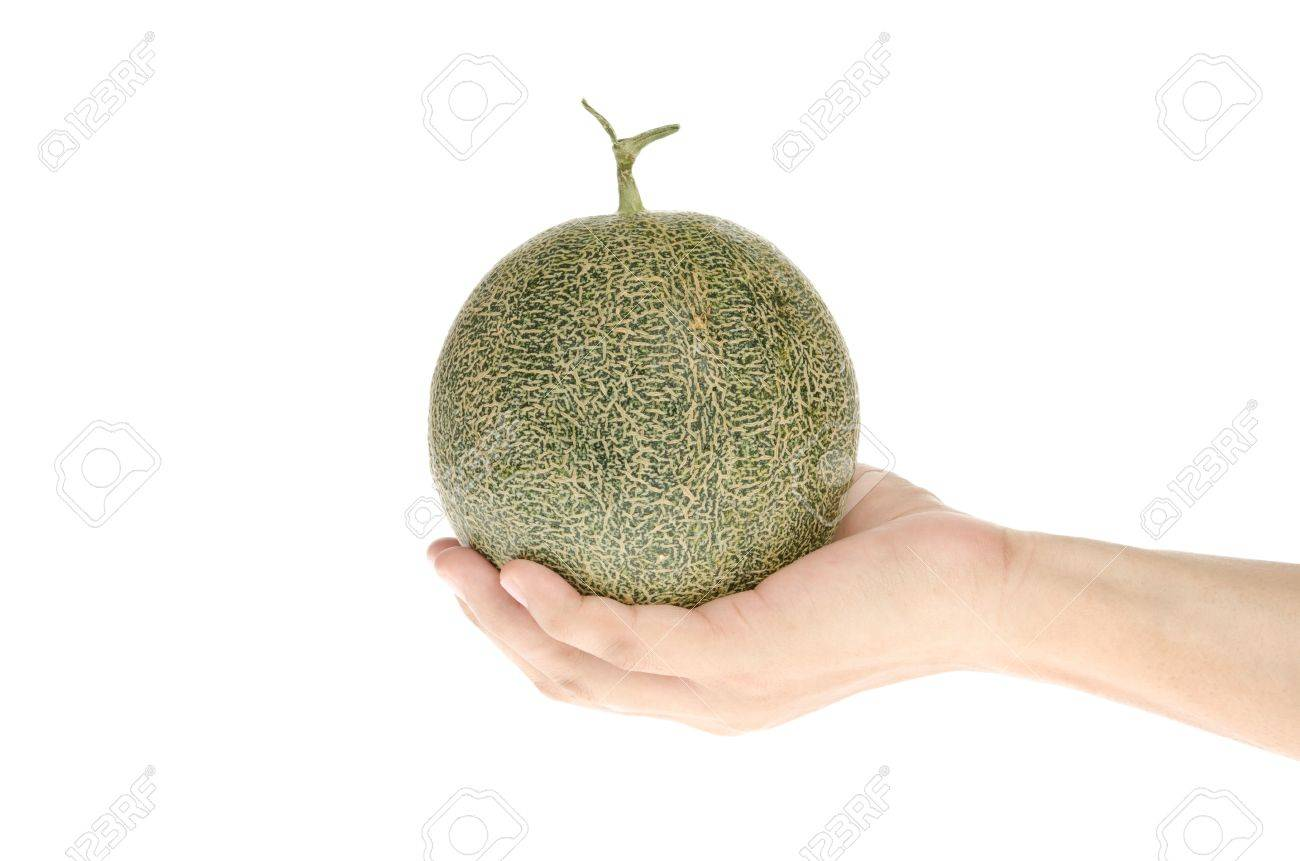 Hand Holding Cantaloupe Melon Stock Photo Picture And Royalty Free Image Image 13799541 Cantaloupe is rich in electrolytes, antioxidants, and phytonutrients. hand holding cantaloupe melon
