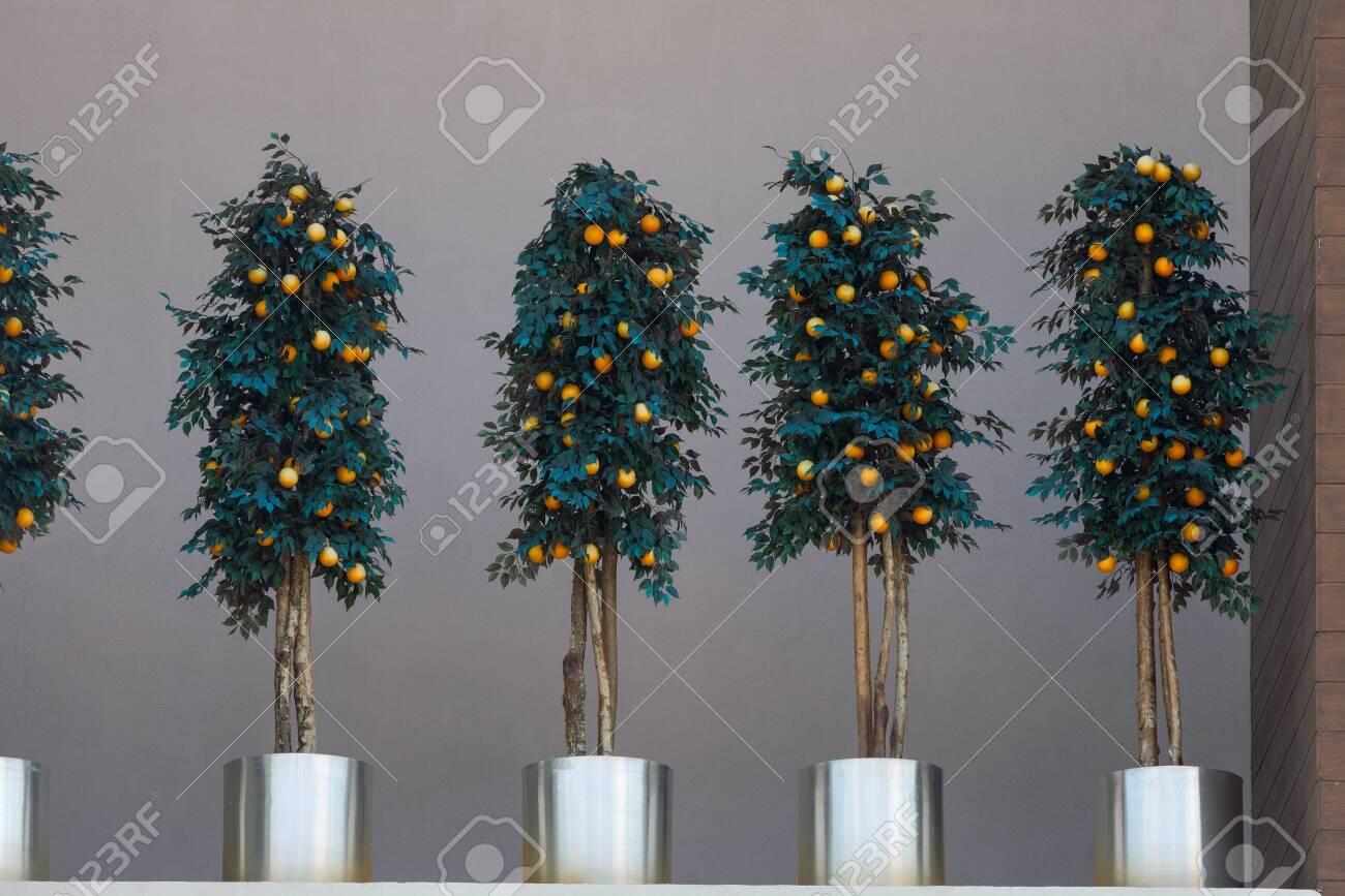 Decorative orange tree - 123699269