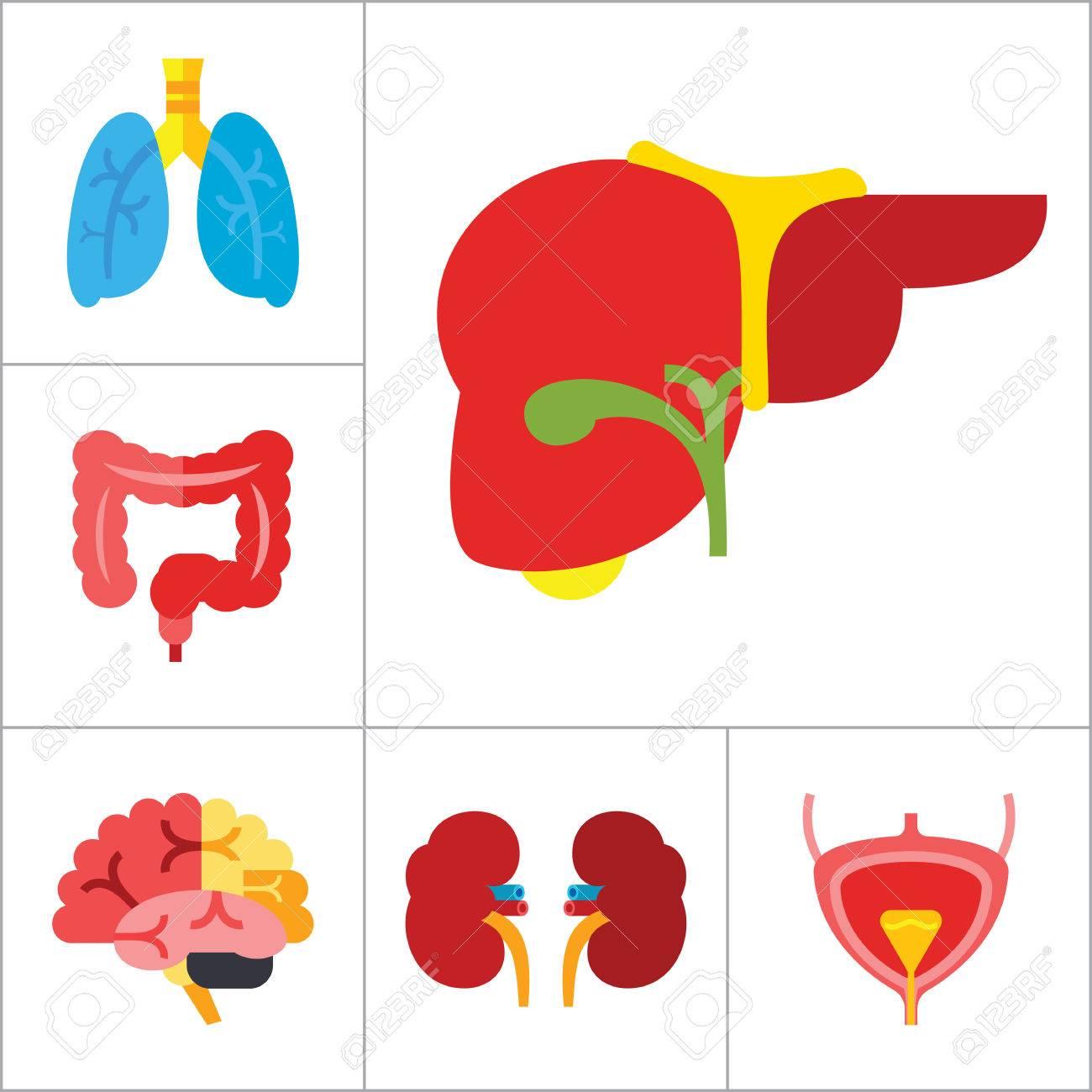 Rganos Icon Set. Corazón Cerebro Riñones Hígado Pulmones Corazón Con ...