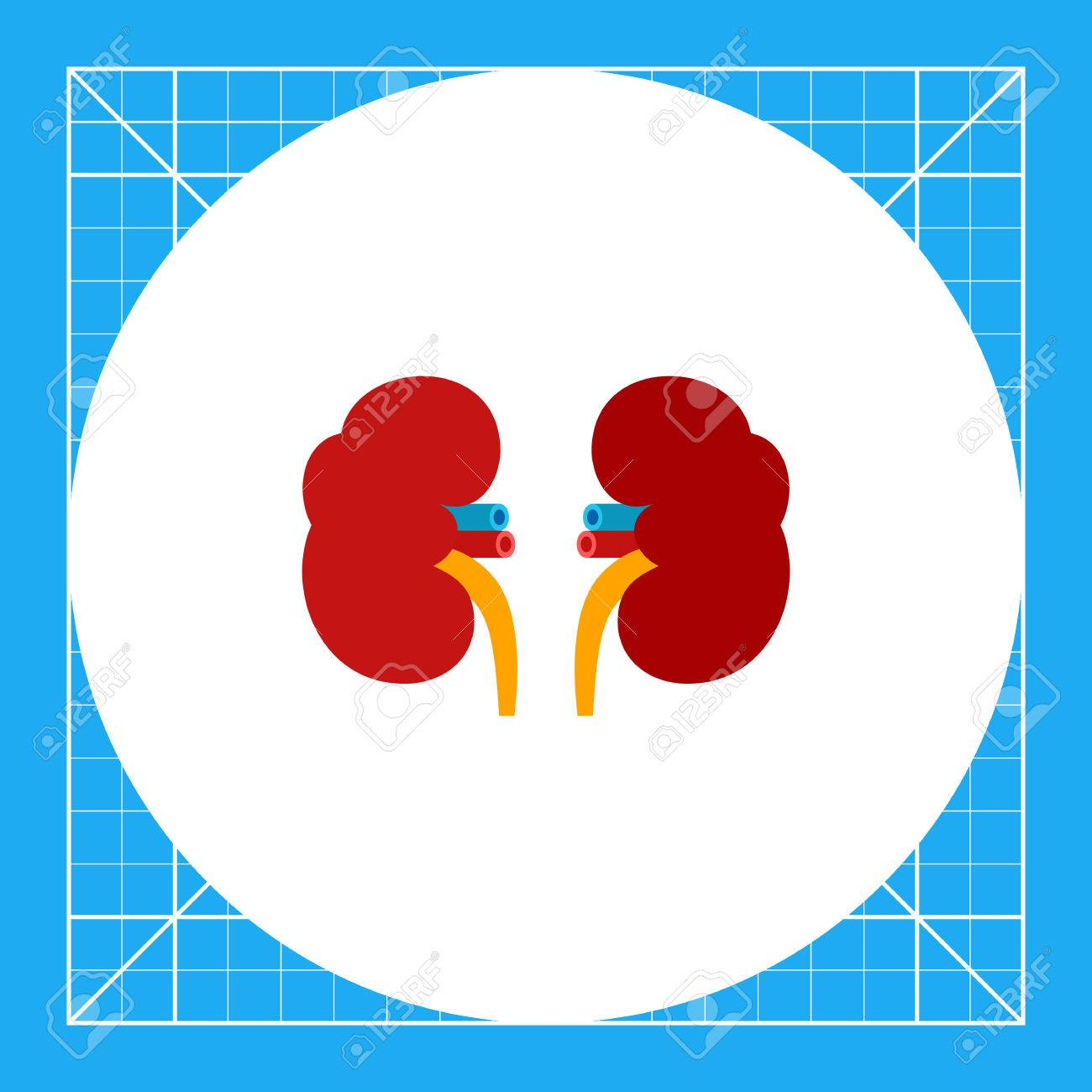 Kidneys Illustration. Human Internal Organ, Health Care, Anatomy ...