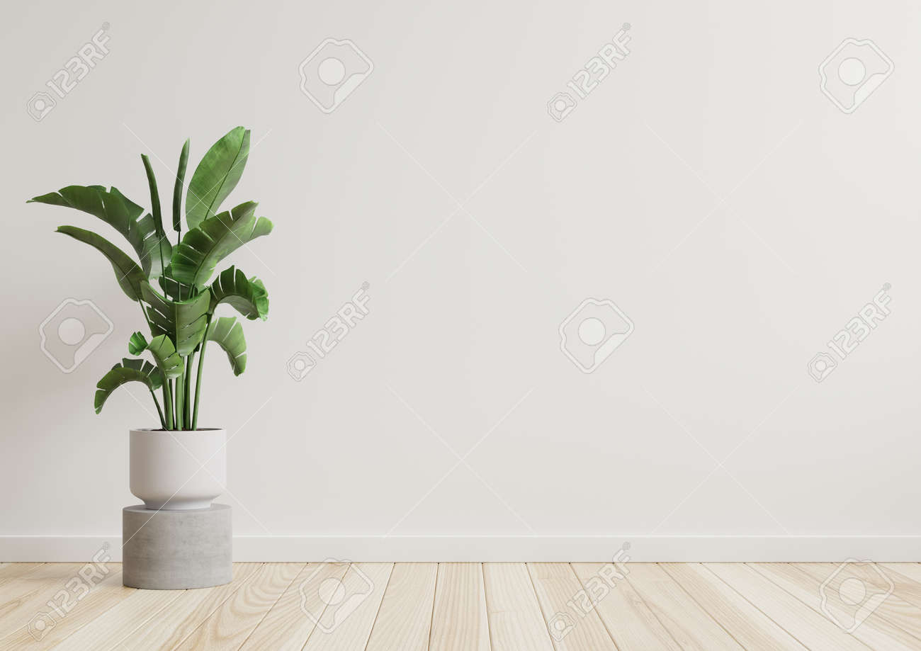 Empty room white walls with beautiful plants sideways on the floor.3d rendering - 166728211